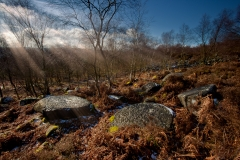 Millstone-Forrest-WEB