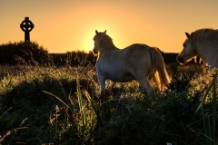 Anglesey-Horses