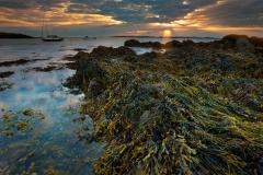 Boat-Pool-Seaweed