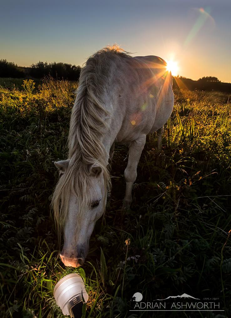 Horse-Flash