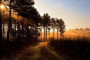 Forest-Lane-Mist.jpg