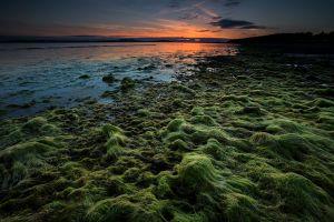 Point-Sand-Green.jpg