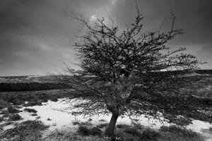 Carl Wark - Winters Tree Mono