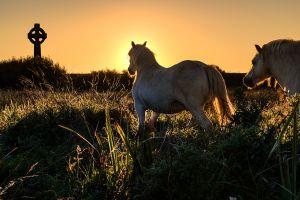 Albion Wild Horses