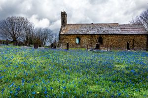 Saint Ina's Church Llanina Bluebells