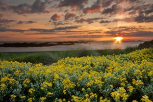 Rhosneigr Sunset Flowers