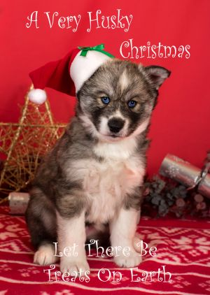 Husky-Christmas-Card-1.jpg