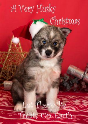 Husky-Christmas-Card-1.jpg