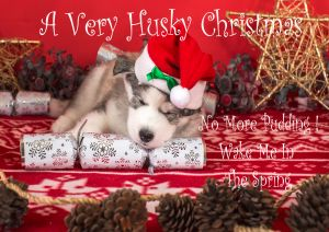 Husky-Christmas-Card-2.jpg