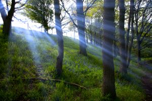 Bluebell Rays 2
