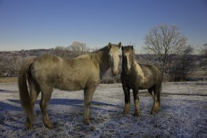 Dearne River Winter Horses
