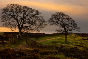 Curbar Sunrise Trees